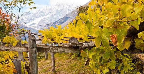 Cave du Vin Blanc de Morgex et La Salle